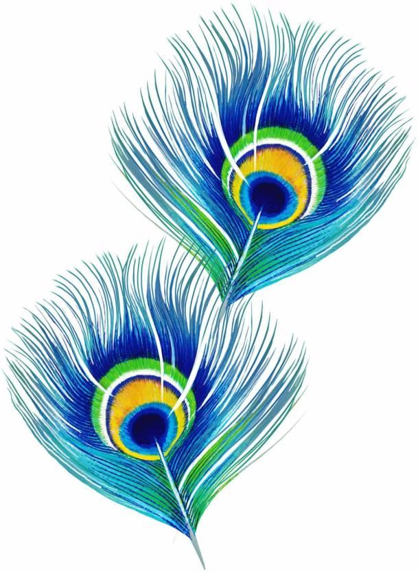 Peacock Feathers Medium Size Rolled Digital Art Print On