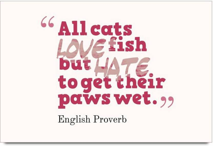 Imerch Cats Love Fish But Quotes By English Proverb Photographic