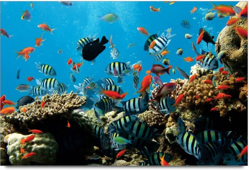 Amy Colorful Aquarium 3d Poster Nature Posters In India