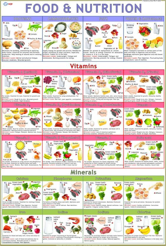 food nutrition chart paper print educational posters in india