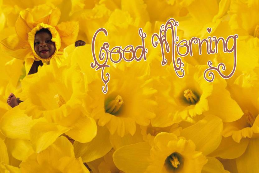 Yellow Flowers Baby Poster With Good Morning Design Upfk506454