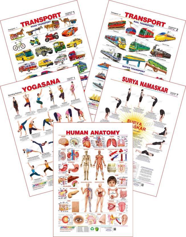 Set Of 5 Educational Wall Charts Human Anatomy Yogasan 1 Surya